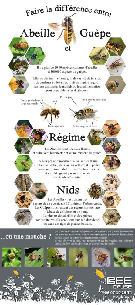 1001 abeilles vs guepes